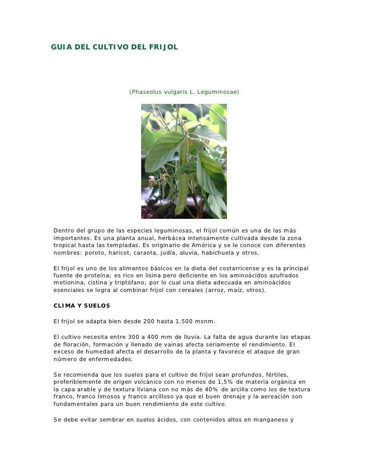 GUIA DEL CULTIVO DEL FRIJOL                               (Phaseolus vulgaris L. Leguminosae)     Dentro del grupo de las ...