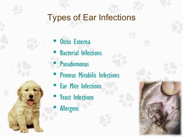 Different Types Of Dog Ear Infections