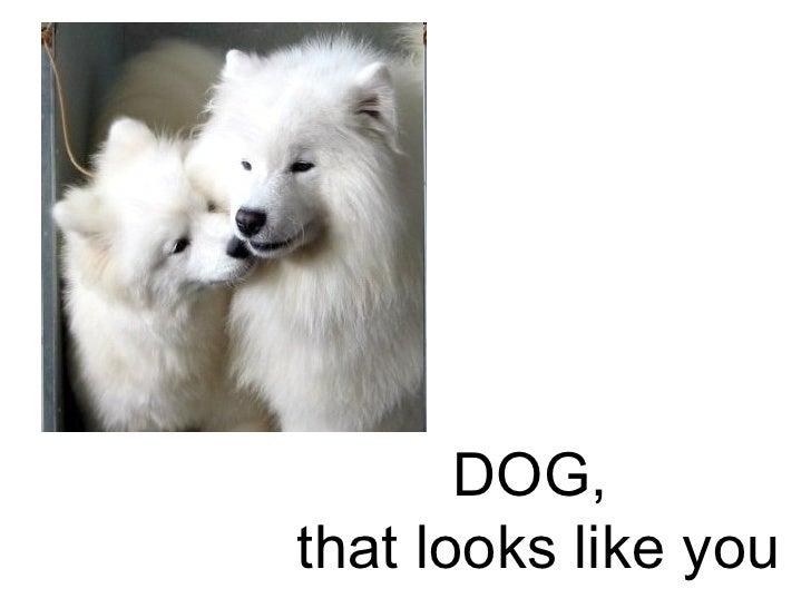 DOG,  that looks like you