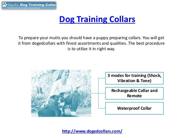 Image Result For Dog Training Classes Taunton