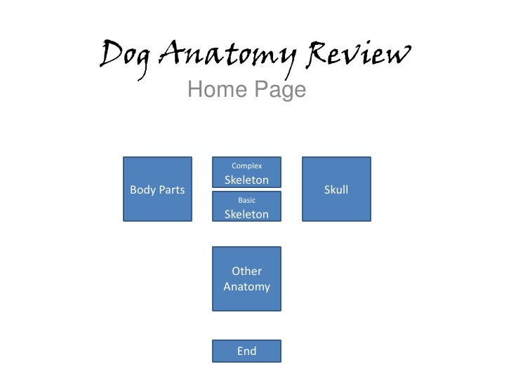 Dog Anatomy Review               Home Page                    Complex                 Skeleton  Body Parts                ...