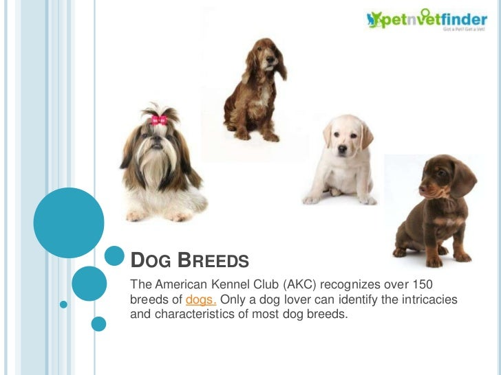 Dog Breeds<br />The American Kennel Club (AKC) recognizes over 150 breeds of dogs. Only a dog lover can identify the intri...