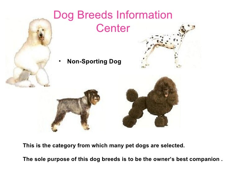 information about dogs images