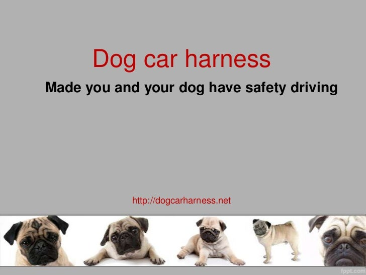 Dog car harness - Made you and your dog have safety driving