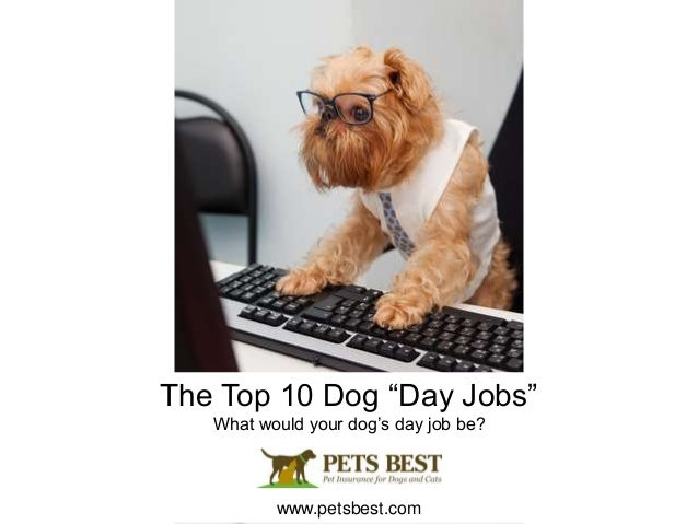 """The Top 10 Dog """"Day Jobs"""" What would your dog's day job be? www.petsbest.com"""