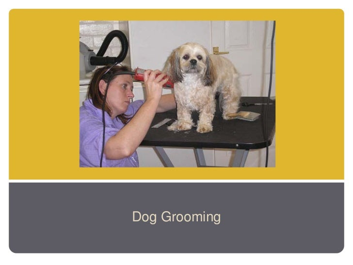 http://doggrooming.inthenaplesarea.com