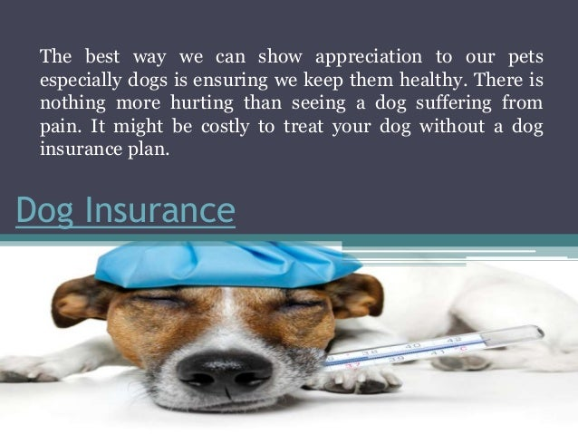 Healthy Pets Dog Insurance Reviews