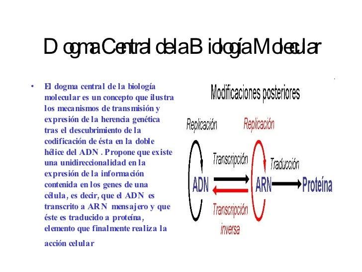 Dogma Central de la Biología Molecular <ul><li>El dogma central de la biología molecular es un concepto que ilustra los me...