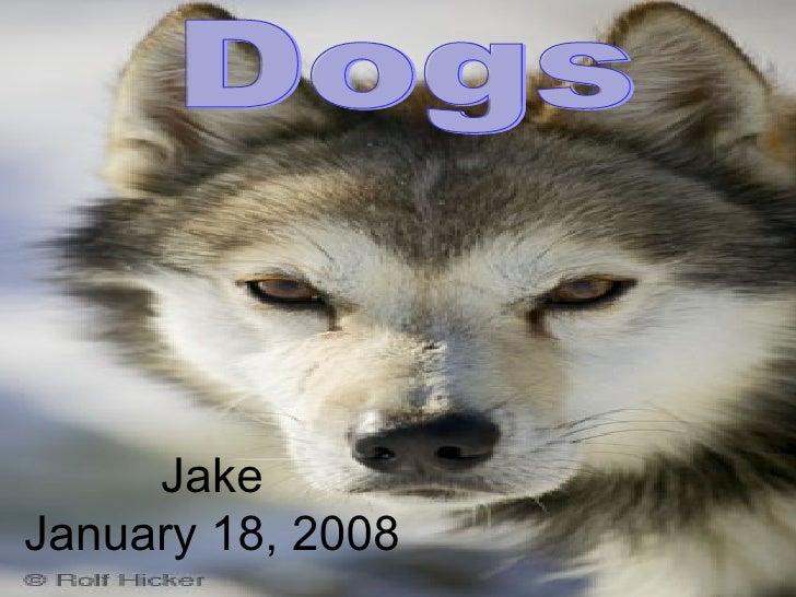 Jake January 18, 2008 Dogs