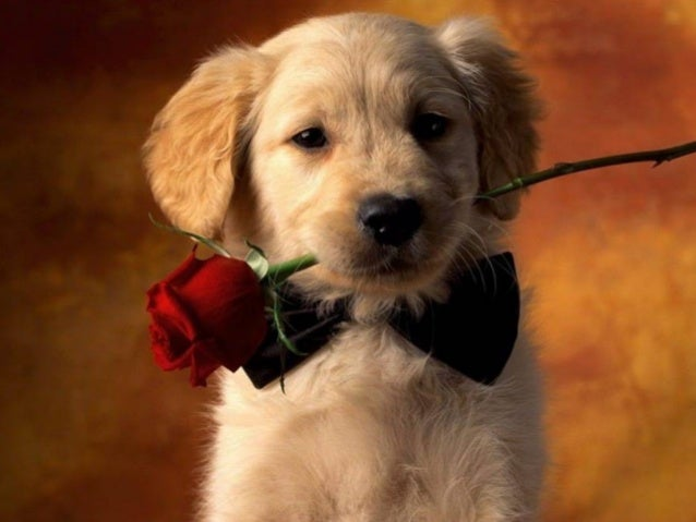 """""""A life without a dog is a mistake"""""""" (Carl Zuckmayer)"""