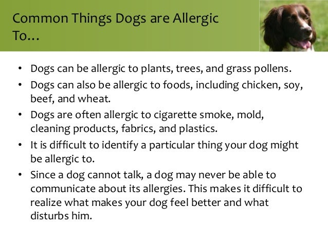 Can Dogs Be Allergic To Cigarette Smoke