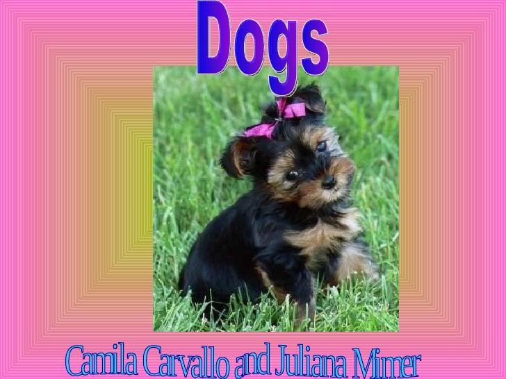 Dogs Camila Carvallo and Juliana Mimer