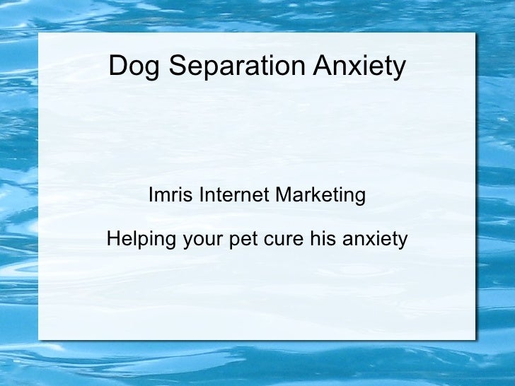 Dog Separation Anxiety Imris Internet Marketing Helping your pet cure his anxiety