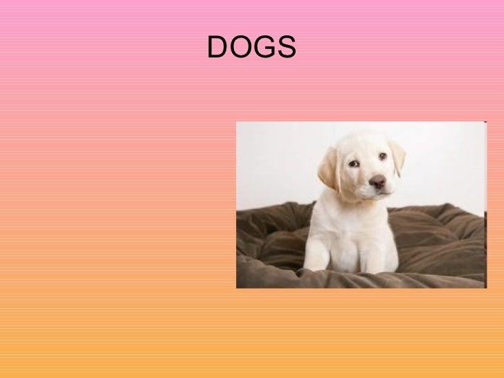 Dogs (Joel)