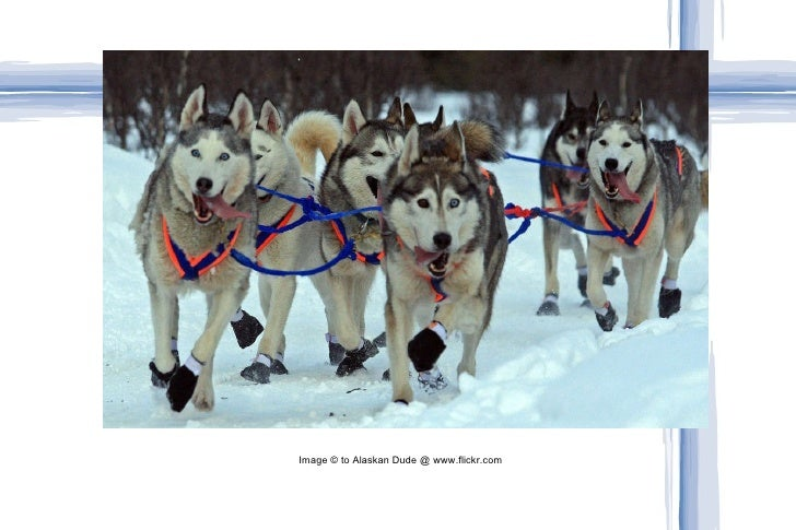 Image © to Alaskan Dude @ www.flickr.com