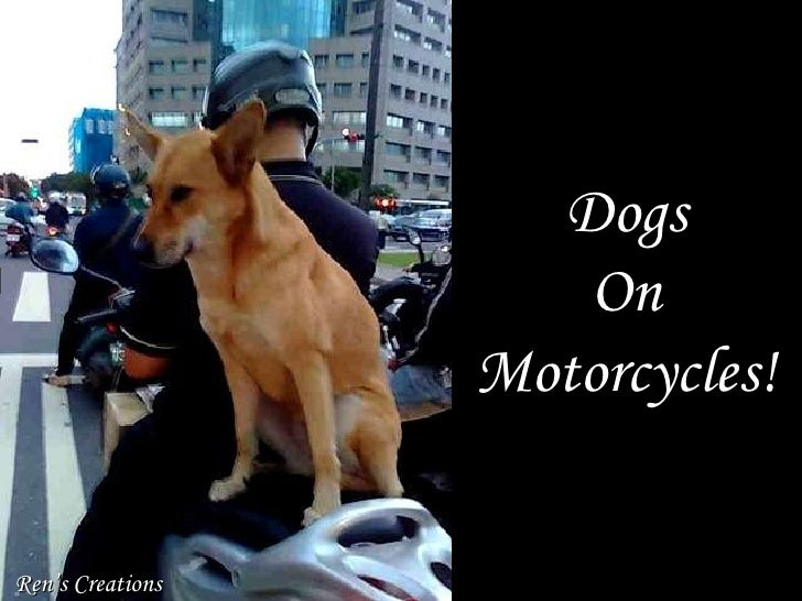 Dogs on motorcycles