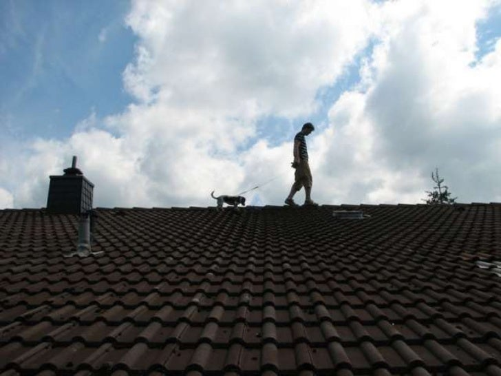 Dogs on roofs (v.m.)