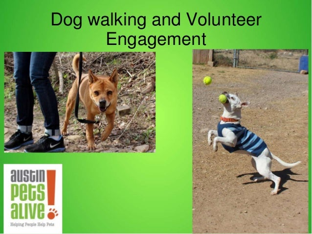 Dog walking and Volunteer Engagement