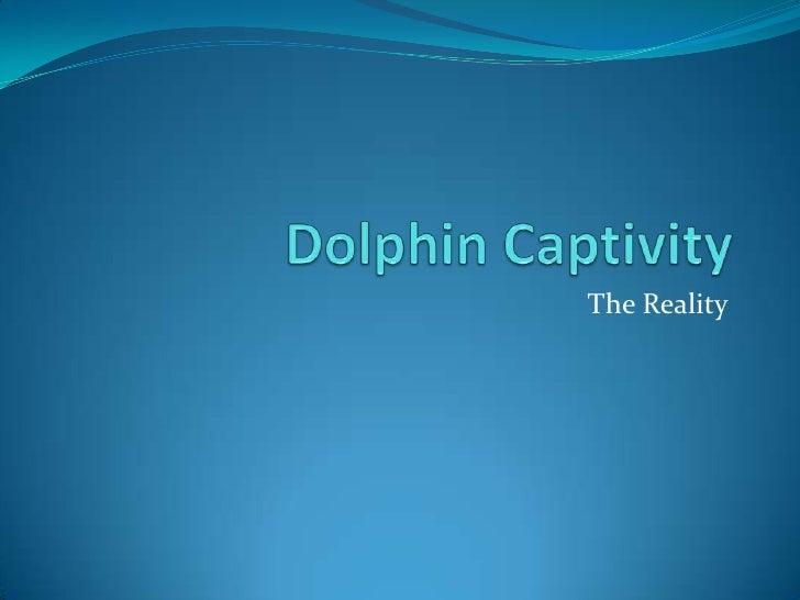 Dolphin Captivity<br />The Reality<br />