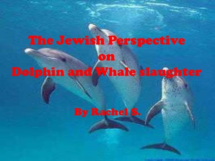 The Jewish Perspective            onDolphin and Whale slaughter        By Rachel S.