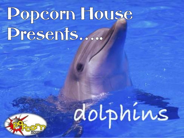 A Dolphin can jump morethan 20 feet above the water!            That is higher           than the average             size...