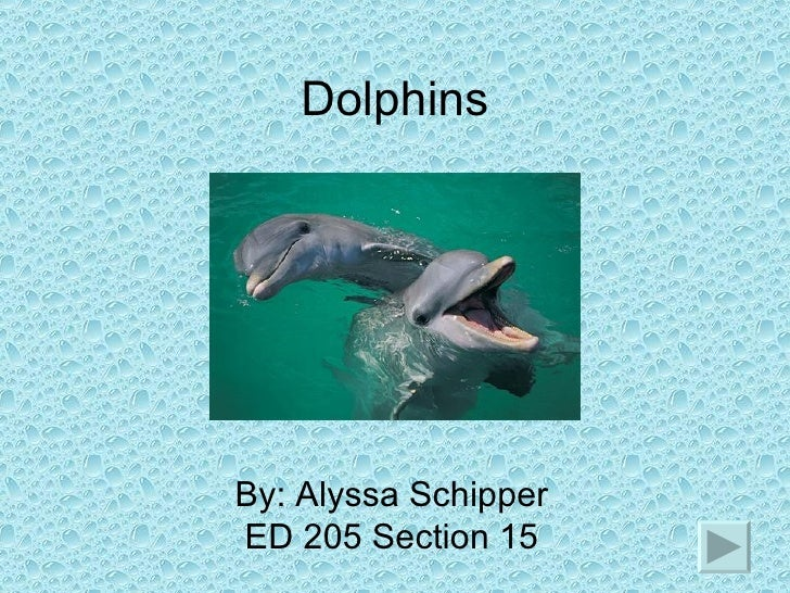 Dolphins By: Alyssa Schipper ED 205 Section 15