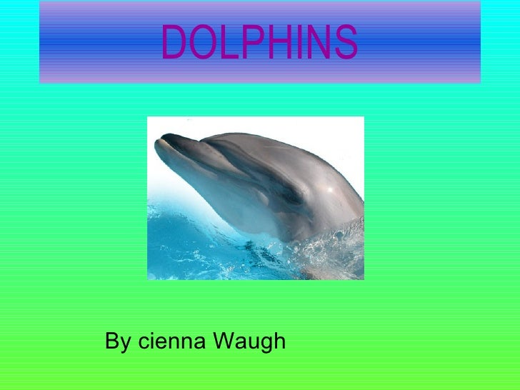 DOLPHINS By cienna Waugh