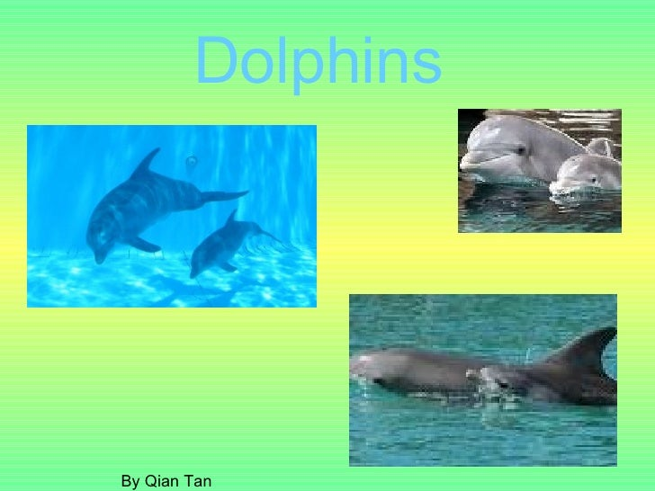 Dolphins  By Qian Tan