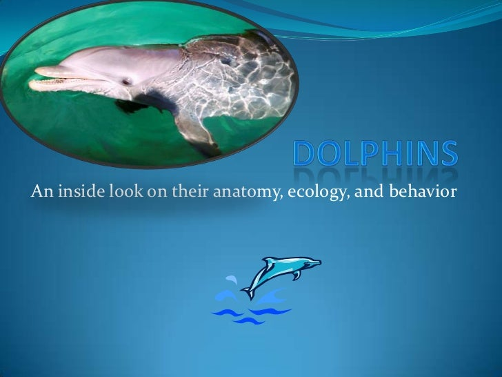 Dolphins <br />An inside look on their anatomy, ecology, and behavior<br />