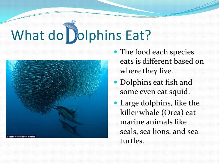 Dolphin diagram for kids dolphin skeletal system elsavadorla for The fish that ate the whale