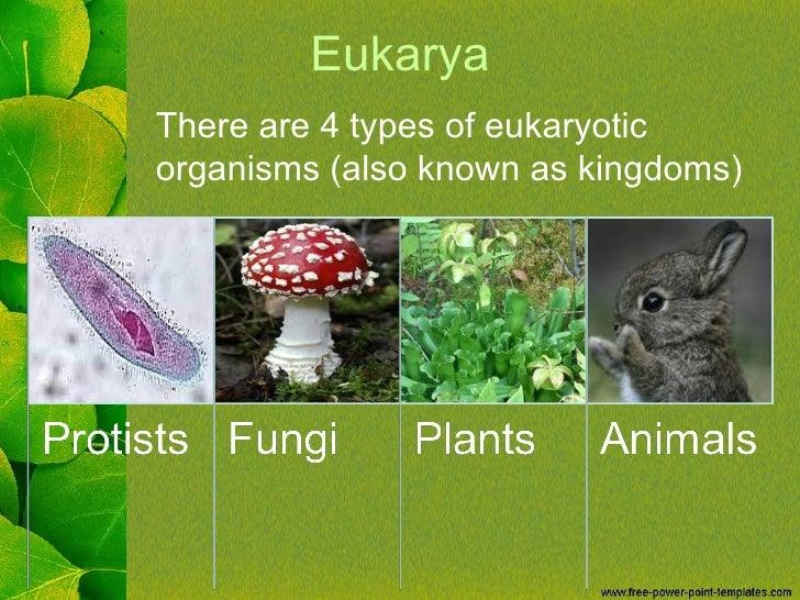 Eukarya Kingdoms
