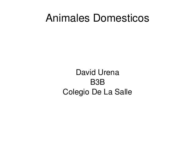 AnimalesDomesticosDavidUrenaB3BColegioDeLaSalle