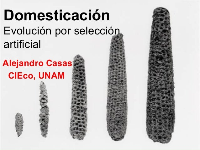 Domesticación Evolución por selección artificial