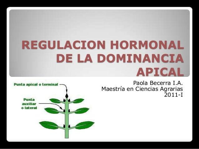 REGULACION HORMONAL    DE LA DOMINANCIA              APICAL                    Paola Becerra I.A.         Maestría en Cien...