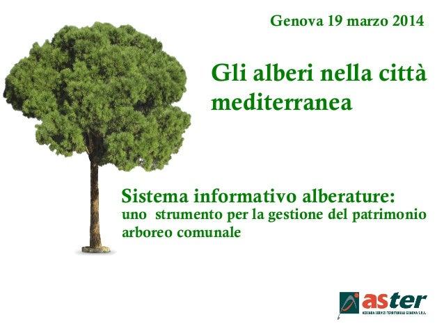 Genova 19 marzo 2014 Gli alberi nella città mediterranea uno strumento per la gestione del patrimonio arboreo comunale Sis...