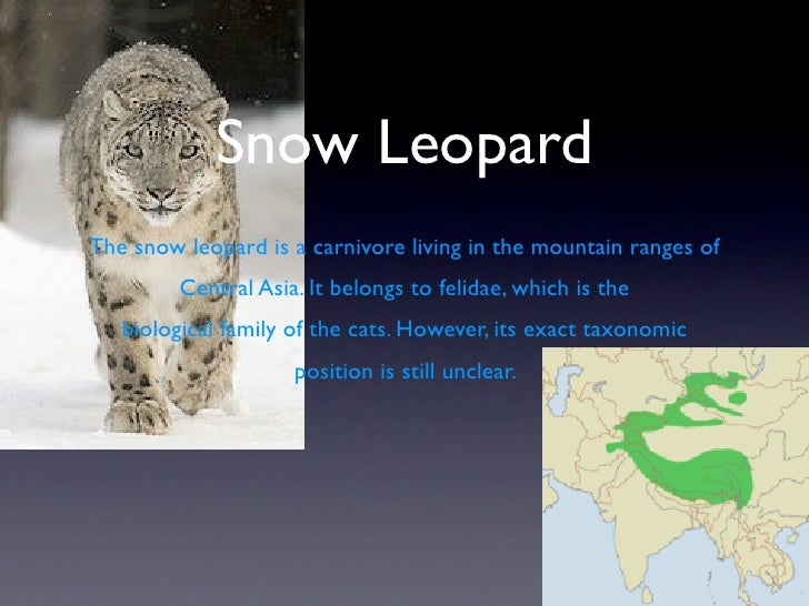 Snow Leopard The snow leopard is a carnivore living in the mountain ranges of          Central Asia. It belongs to felidae...