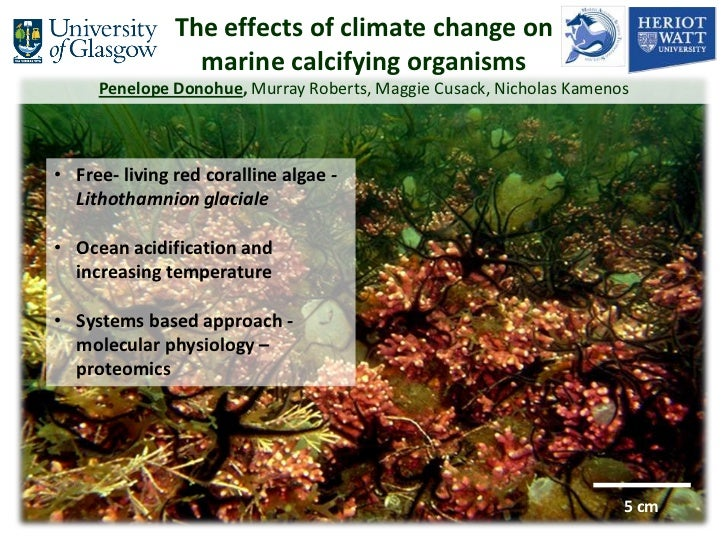 The effects of climate change on                 marine calcifying organisms     Penelope Donohue, Murray Roberts, Maggie ...