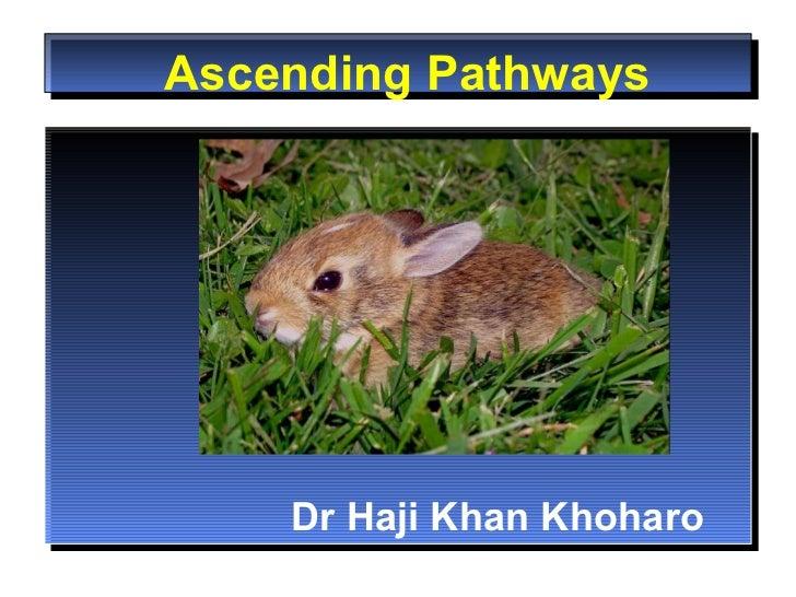 Ascending Pathways Dr Haji Khan Khoharo