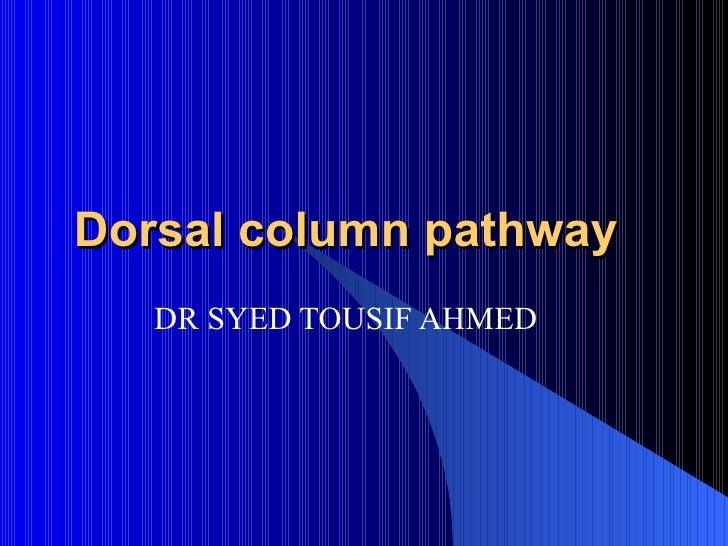 Dorsal column pathway