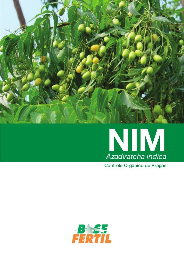 NIM  Azadiratcha indica  Controle Orgânico de Pragas  NIM Azadirachta indica - Controle Orgânico de Pragas - 1