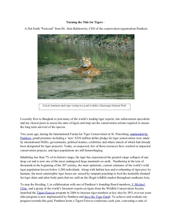"""Turning the Tide for Tigers –   A Dot Earth """"Postcard"""" from Dr. Alan Rabinowitz, CEO of the conservation organization Pant..."""