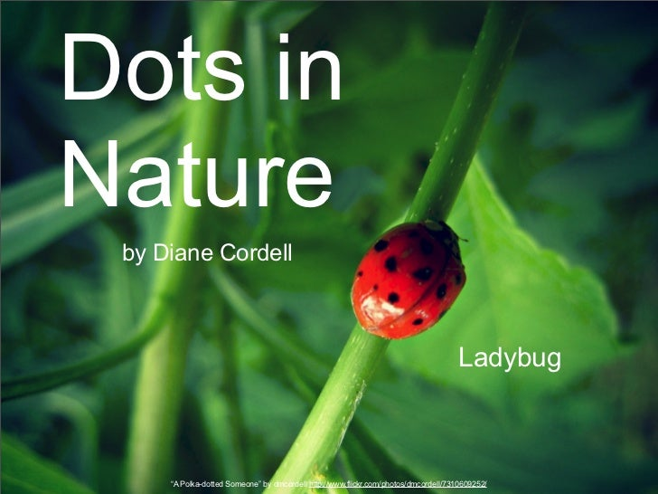 Dots inNature by Diane Cordell                                                                                     Ladybug...