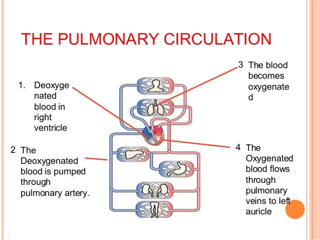 754099 additionally 14626845 in addition Diagram With Name In Human Body Body Diagram Of Organs likewise Double Circulation Fainal likewise Diagram Of Intestines Female Intestine Diagram Human Body Diagram. on parts of the circulatory system
