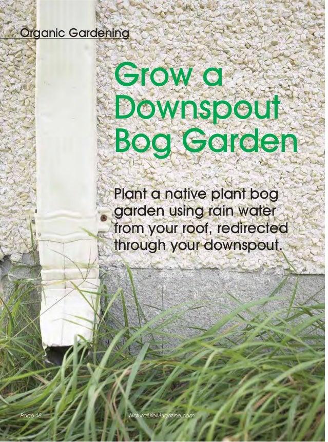 Organic Gardening              Grow a              Downspout              Bog Garden              Plant a native plant bog...