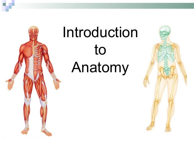 What is a anatomy