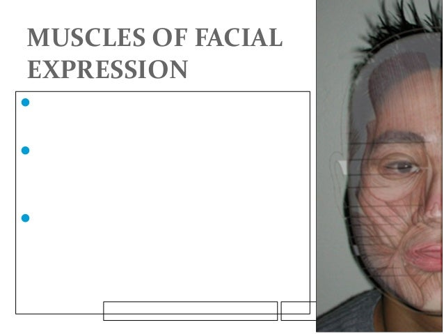 MUSCLES OF FACIAL EXPRESSION The muscles of facial expression arise  from the second branchial arch, are innervated by t...