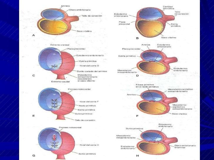 Dr.Ppt EmbriologíA2