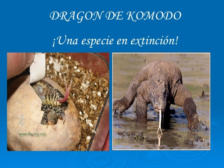 DRAGON DE KOMODO ¡Una especie en extinción!