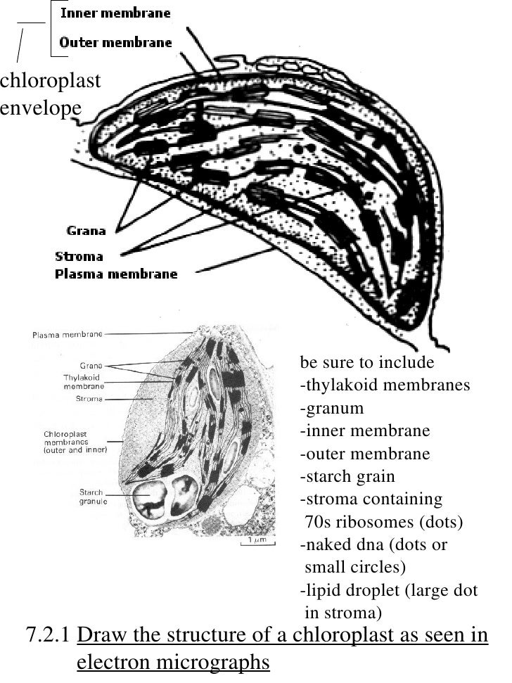 annotated diagram of a leaf