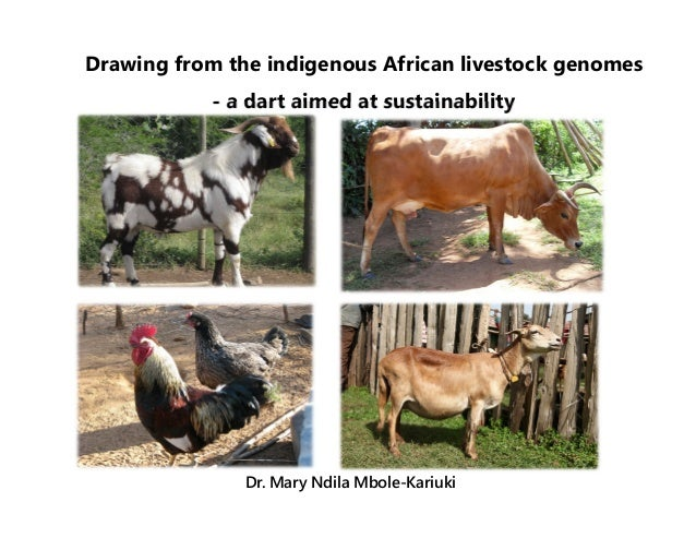 Drawing from the indigenous African livestock genomes - a dart aimed at sustainability Dr. Mary Ndila Mbole-Kariuki
